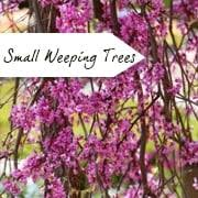 small garden trees gardening ideas