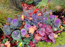 danger garden the 2015 ornamental cabbage and kale challenge
