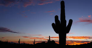 native plant salvage arizona bill would limit protections for native plants saguaros