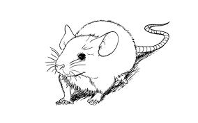 step step animal drawing tutorials sketchbooknation