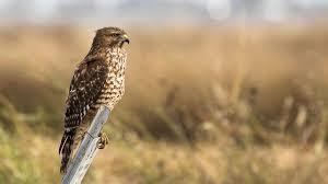 news and information yolo audubon society