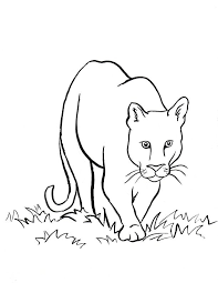 mountain lion coloring samantha bell