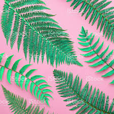 Free Picture Leaf Nature Fern Tropical Fresh Fern Leaves Nature Background Stock Photo More