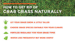 How To Get Rid Of Flies In The Backyard by How To Get Rid Of Crabgrass The Easy Way