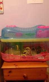 Hamster Cages Petsmart 366 Best Hammys Images On Pinterest Hamsters Hamster Cages And