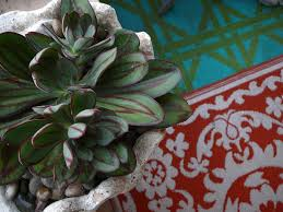 succulents meaning 100 succulents meaning graptopetalum world of succulents