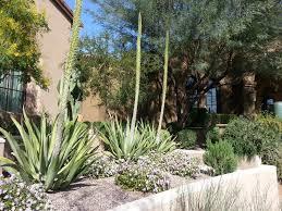 desert landscaping plants desert landscaping picks the plants
