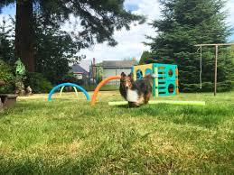 bend u2014 trailblazing tails dog running dog training pet sitting
