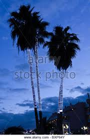 palm trees with lights stock photos palm trees with