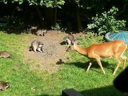 backyard animals
