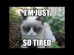 Tired Cat Meme - grumpy cat memes lol cute youtube
