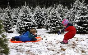 How To Trim A Real Christmas Tree - real christmas trees a guide to buying cutting and caring for a