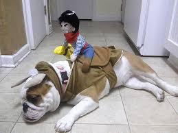 english bulldog costumes halloween photo album best fashion