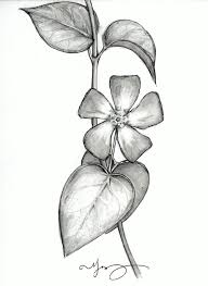 photos pencil sketch flower images drawing art gallery