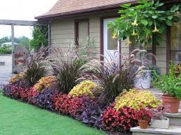 purple grass with coleus begonias and purple vine