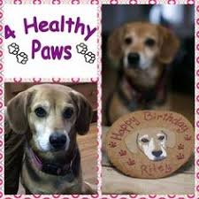 4 healthy paws dog bakery special order doggy birthday cake