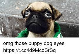 Puppy Dog Eyes Meme - omg those puppy dog eyes httpstcold9mcqsrsq meme on sizzle