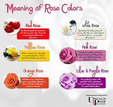 roses colors meaning of colors visual ly