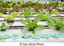 hydroponic images and stock photos 5 226 hydroponic photography