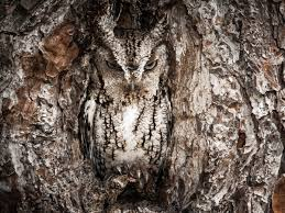 10 awesome owl photos for international owl awareness day yubanet