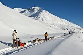 dog sledding in savoie mont blanc french alps savoie mont blanc