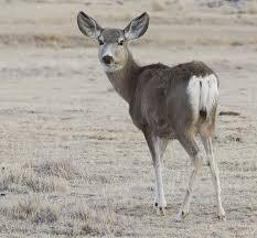 New Mexico wildlife images Wildlife cimarron nm jpg