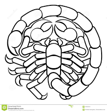 Astrology Sign Scorpio Scorpion Astrology Horoscope Zodiac Sign Stock Vector