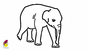 baby elephant easy drawing how to draw an elephant baby