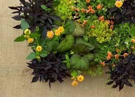 Vertical Garden Ideas 20 Best Vertical Gardens Images On Pinterest Vertical Gardens