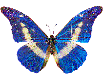 wallpapers of glitter butterflies glitter picture images butterfly wallpaper and background photos