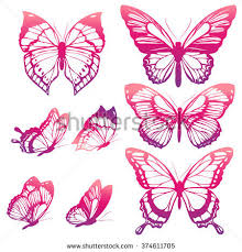 butterflies stock images royalty free images vectors