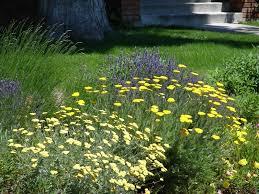 plants native to utah new utah gardener waterwise plants for utah