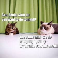 Pinky And The Brain Meme - pinky and the brain quote grumpy cat know your meme
