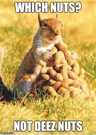 Squirrel Nuts Meme - squirrel imgflip