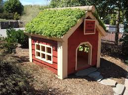 10 tips for gardening with dogs here u0027s how to keep them and you