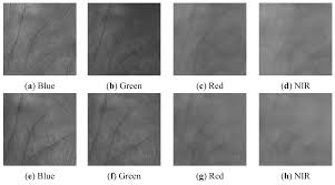 sensors free full text multispectral palmprint recognition