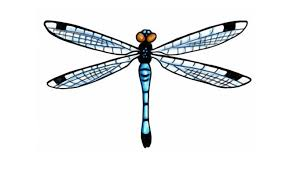 5 spiritual blue dragonfly designs for style presso