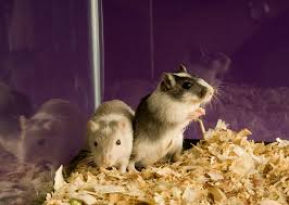 funky and fun names for pet gerbils