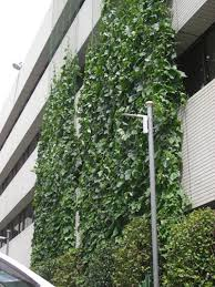 grow a green curtain to cut down on cooling costs
