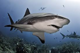 the meaning and symbolism of the word shark