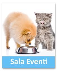 alimentazione casalinga gatto alimentazione casalinga 28 images meglio dieta casalinga o