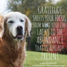 Quotes For Thanksgiving 3 Gratitude Quotes For Thanksgiving Golden Woofs