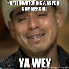 Aspca Meme - after watching a aspca commercial ya wey mexican meme generator