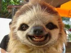 Cute Sloth Meme - cute sloth pictures weknowmemes