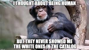 Chimp Meme - chimp memes imgflip
