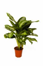 best houseplants for low light qu0026a northern light for