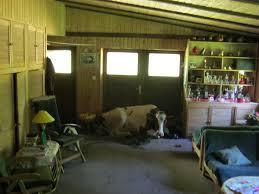 Tierarzt Salzgitter Bad Pol Se Quickborn Kein Pferd Auf Dem Flur Sondern Eine Kuh Im