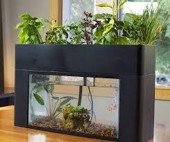 self sustaining garden sustaining aquarium garden