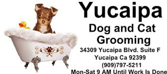 yucaipa dog u0026 cat grooming dog and cat grooming in yucaipa