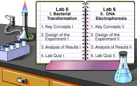 lab bench molecular biology pearson the biology place